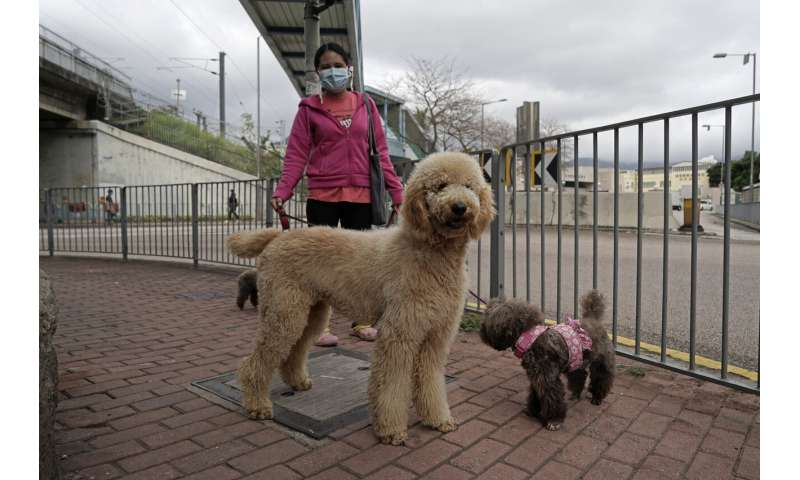 Dogs, cats can't pass on coronavirus, but can test positive