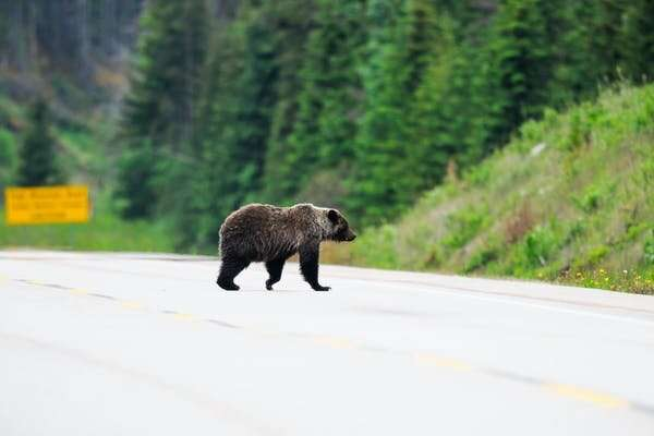 Don't feed the bears! How parks get visitors to protectnature