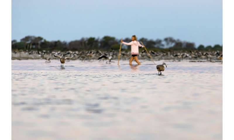 Eye candy: More than 50,000 pink flamingos mass in France