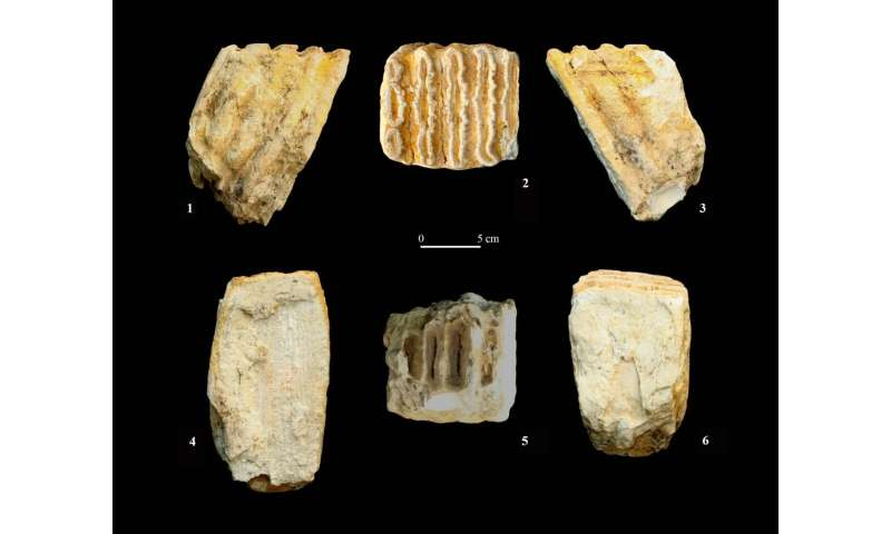 First exhaustive review of fossils recovered from Iberian archaeological sites