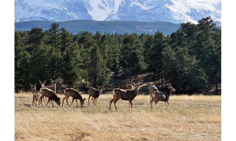 Forests bouncing back from beetles, but elk and deer slowing recovery