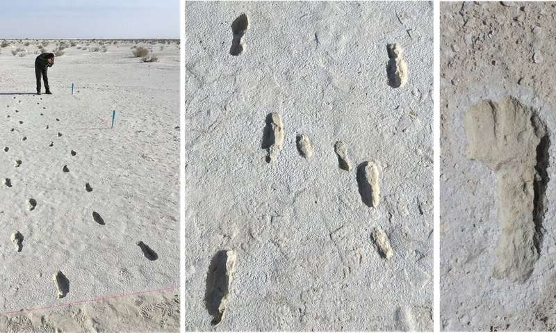 Fossil footprints: the fascinating story behind the longest-known prehistoric journey