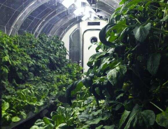 Los futuros astronautas podrían disfrutar de vegetales frescos de un invernadero orbital autónomo