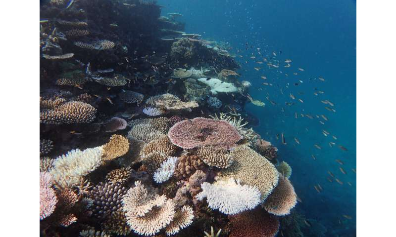 Gene editing study finds gene for heat tolerance in corals