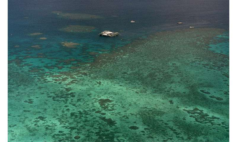 Great Barrier Reef enters crucial period in coral bleaching