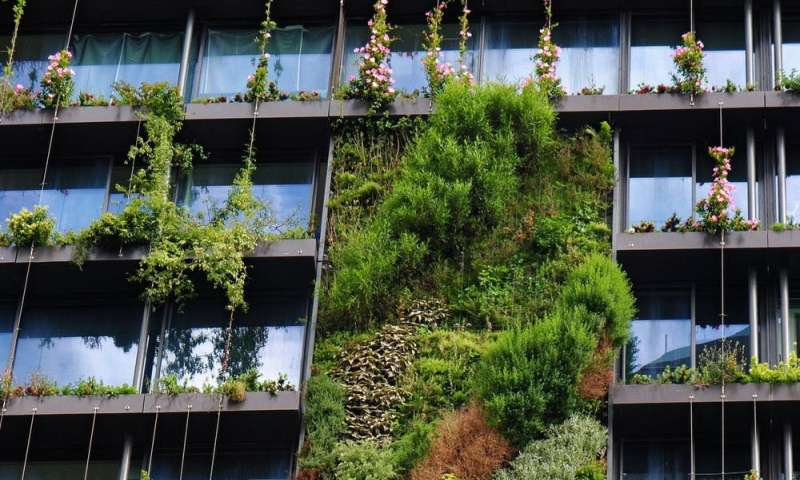 Greening our grey cities: here's how green roofs and walls can flourish in Australia
