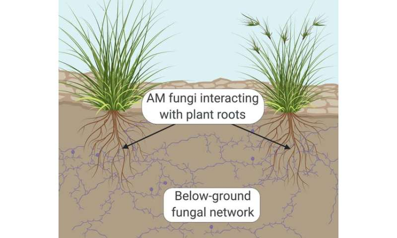 How fungi's knack for networking boosts ecological recovery after bushfires