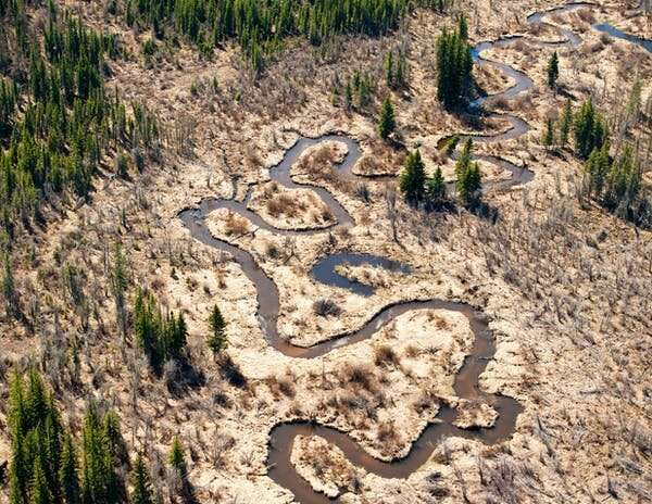How plants can help clean up oilsands tailing ponds