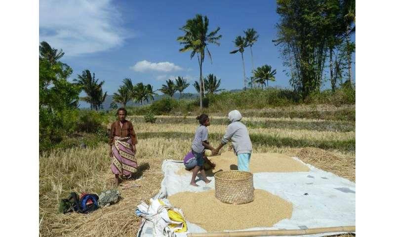 How Timor-Leste has mobilised against COVID-19