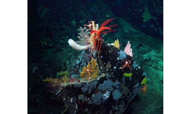 International team identifies areas of top priority for deep-sea monitoring and conservation