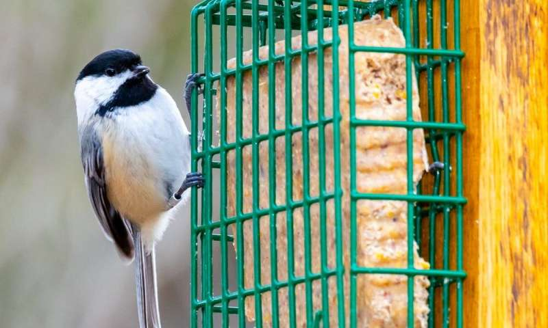 It's OK to feed wild birds – here are some tips for doing it the right way