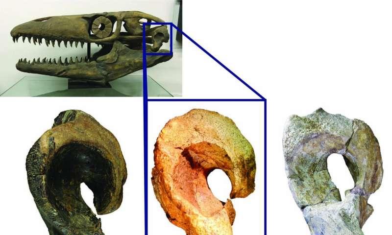 Jaws of Death: USU Eastern Paleontologist Renames Giant, Prehistoric Marine Lizard
