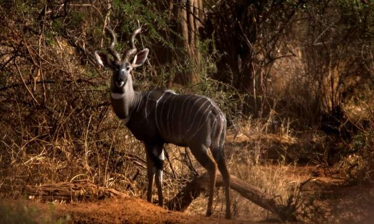 Locust invasion threatens wildlife and livelihoods in Kenya