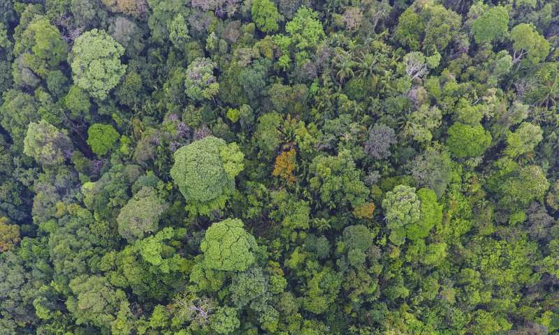 Long-living tropical trees play outsized role in carbon storage