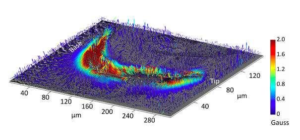 Magnetic teeth revealed using quantum imaging