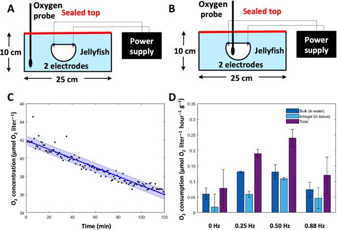 Microelectronics embedded in live jellyfish enhance propulsion
