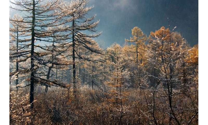 La naturaleza está ampliamente adaptada al clima actual, lo que dificulta adaptarse a uno nuevo.