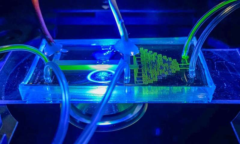 Novel technology for the selection of single photosynthetic cells