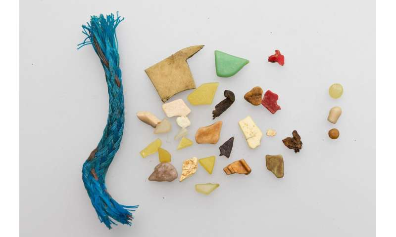 Plastic debris releases potentially harmful chemicals into seabird stomach fluid