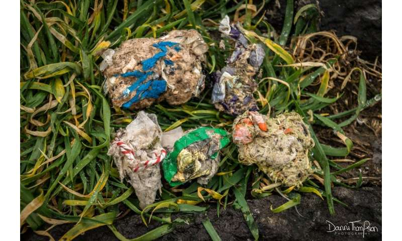 Plastic found lining UK seabird nests on a worrying scale
