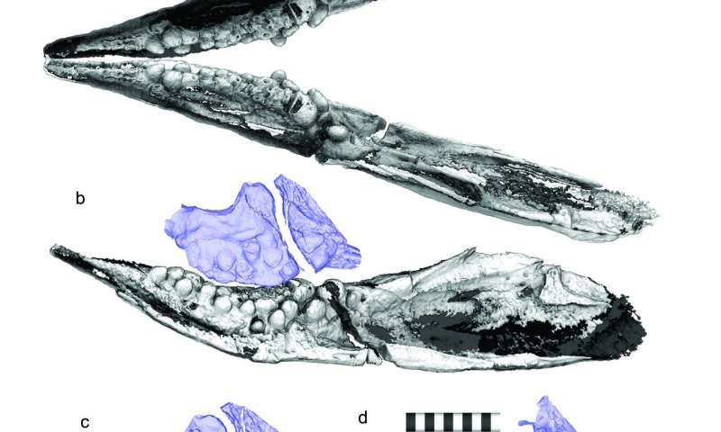 Prehistoric sea creatures evolved pebble-shaped teeth to crush shellfish