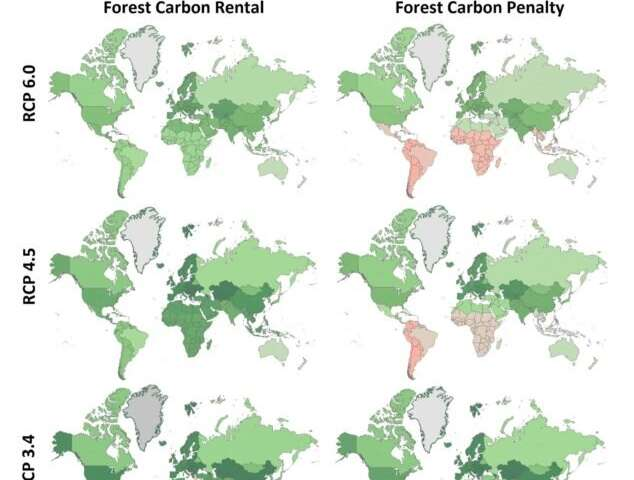 Researchers model spatial and temporal consequences of increased woody biomass use on the global forest ecosystem