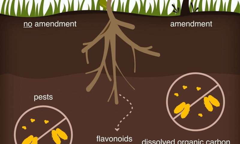 Scientists learn how plants manipulate their soil environment to assure a cheap, steady supply of nutrients