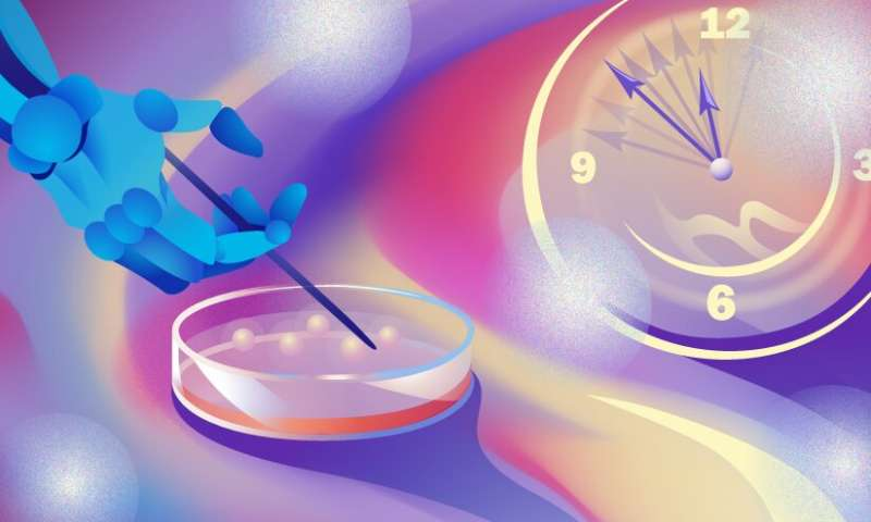 Scientists speed up artificial organoid growth and selection