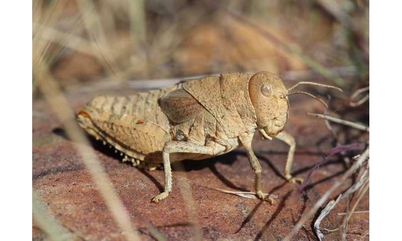 Los científicos advierten a la humanidad sobre la disminución mundial de insectos