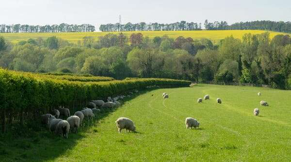 Smaller farm fields can reduce biodiversity loss and increase wild plants, birds, beetles and bats