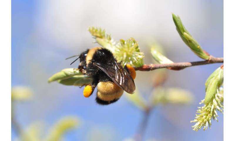 Spring signals female bees to lay the next generation of pollinators