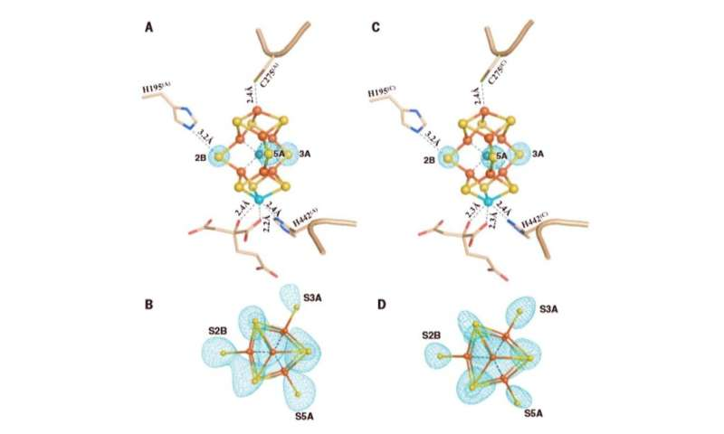 Structural evidence for a dynamic metallocofactor during dinitrogen reduction by Mo-nitrogenase