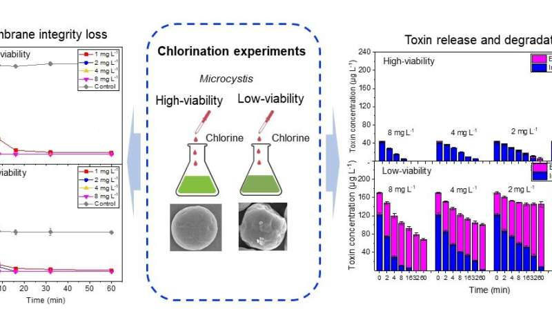 Study highlights differences of chlorination to treat high- and low-viability cyanobacteria