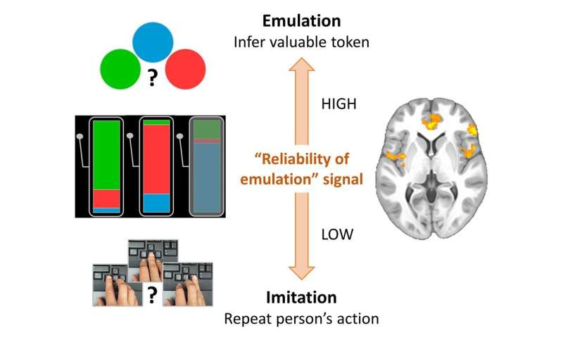 Study shows how brain gains knowledge through observation