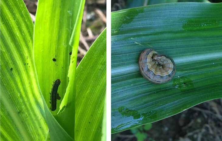 La 'intensificación sostenible' de los sistemas de cultivo es buena para los agricultores, el medio ambiente
