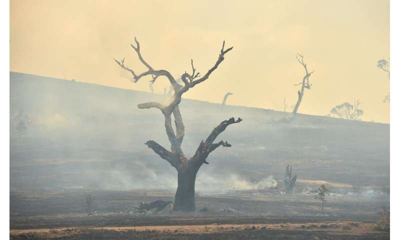 The devastating fires have raged since September, burning more than 10 million hectares (25 million acres) and killing 33 people