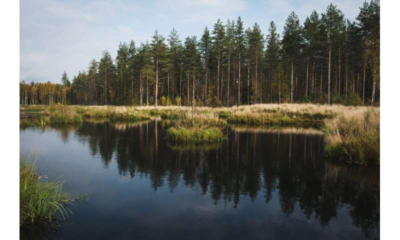 The success of the rewilding effort has led to the process being repeated at a further 23 degraded peatland sites across Finland