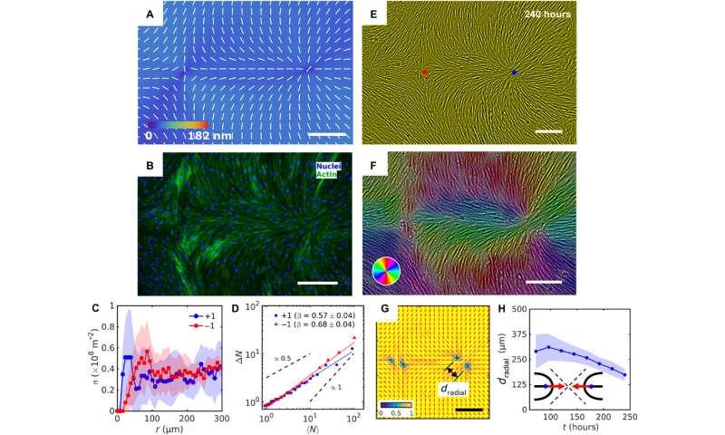 Topology control of human fibroblast cells monolayer by liquid crystal elastomer