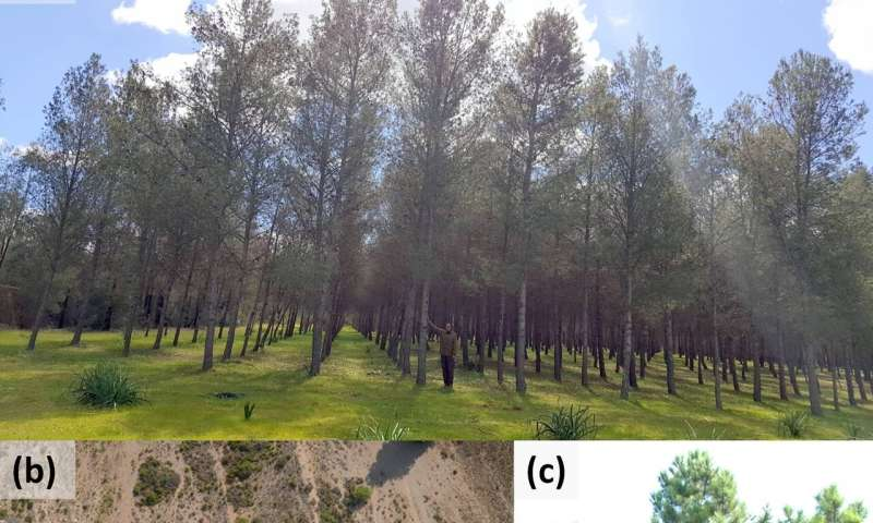 Tree growth responses to climate change reveal differential sensitivity to precipitation among populations of the widesp