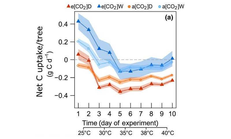 Under extreme heat and drought, trees hardly benefit from an increased CO2 level