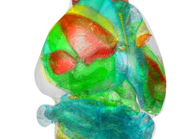 Unravelling complex brain networks with automated 3-D neural mapping