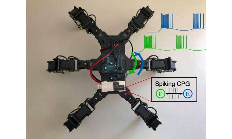 Using astrocytes to change the behavior of robots controlled by neuromorphic chips