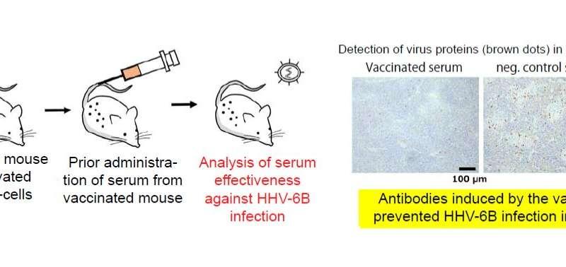Vaccine developed for human herpesvirus 6B (HHV-6B)