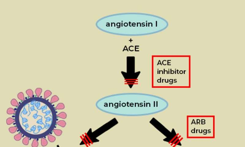 What is the ACE2 receptor, how is it connected to coronavirus and why might it be key to treating COVID-19? The experts explain