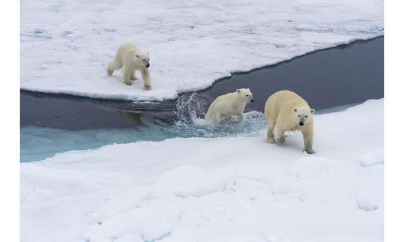 Your plane travel destroys polar bear habitat