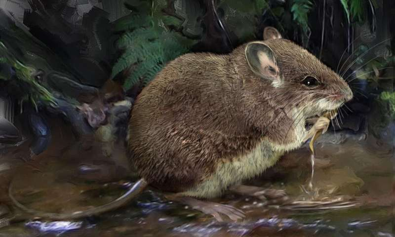 New species of aquatic mice discovered, cousins of one of the world's rarest mammals