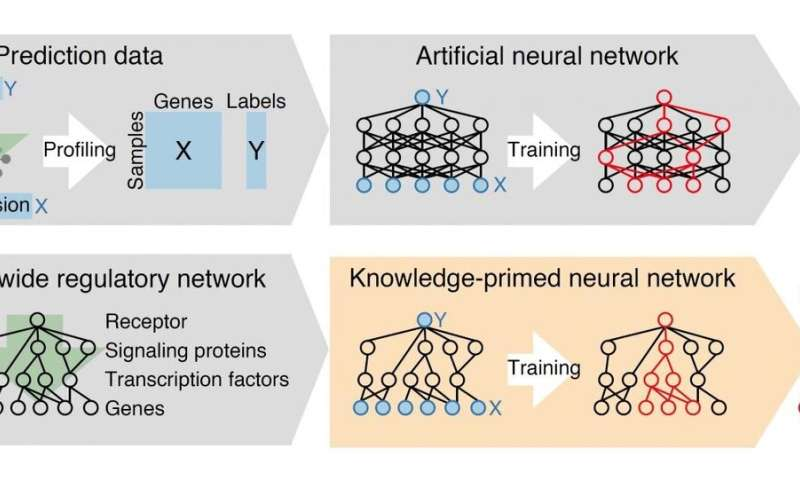Deep learning on cell signaling networks establishes AI for single-cell biology