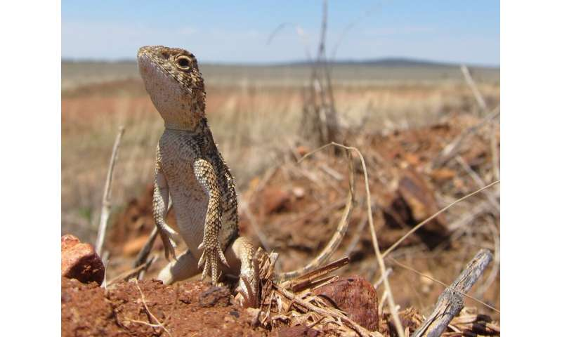New research reveals these 20 Australian reptiles are set to disappear by 2040