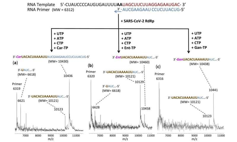 Researchers identify multiple molecules that shut down SARS-Cov-2 polymerase reaction