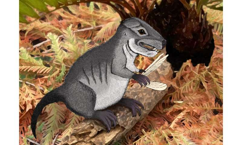 Ancient cynodont discovered 220 million years old
